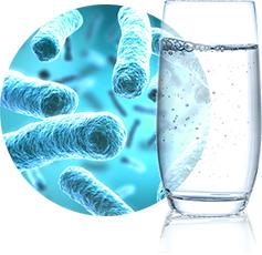 Wasserttest auf Bakterien im Leitungswasser