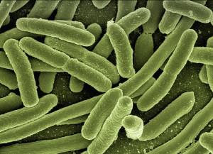 Colibakterien können das Leitungswasser belasten